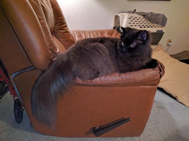 La! La! La! Andy enjoys a little recliner arm rest, again! But he keeps Dougy in sight.