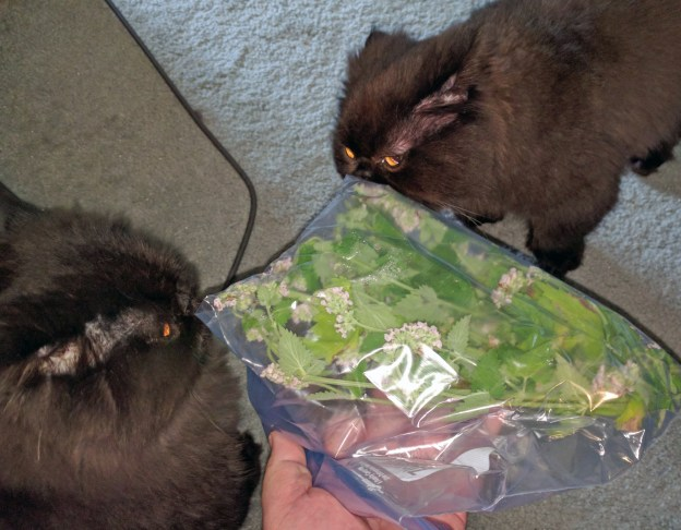 """Inhale deeply, boys! It's fresh Maine-grown 'nip!"""