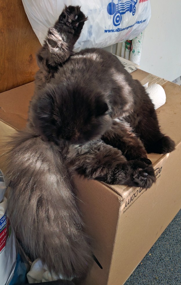 91316 andy cleans precious on his box 2.jpg