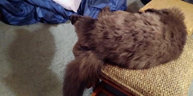 111116-dougys-kittycat-shadow