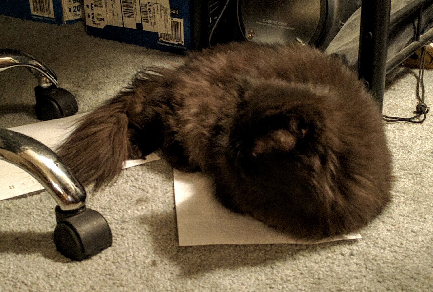 Andy settles onto a print out that landed on the floor by the printer...