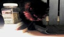 andy finds catnip