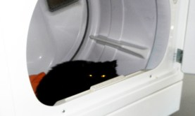 andy in dryer