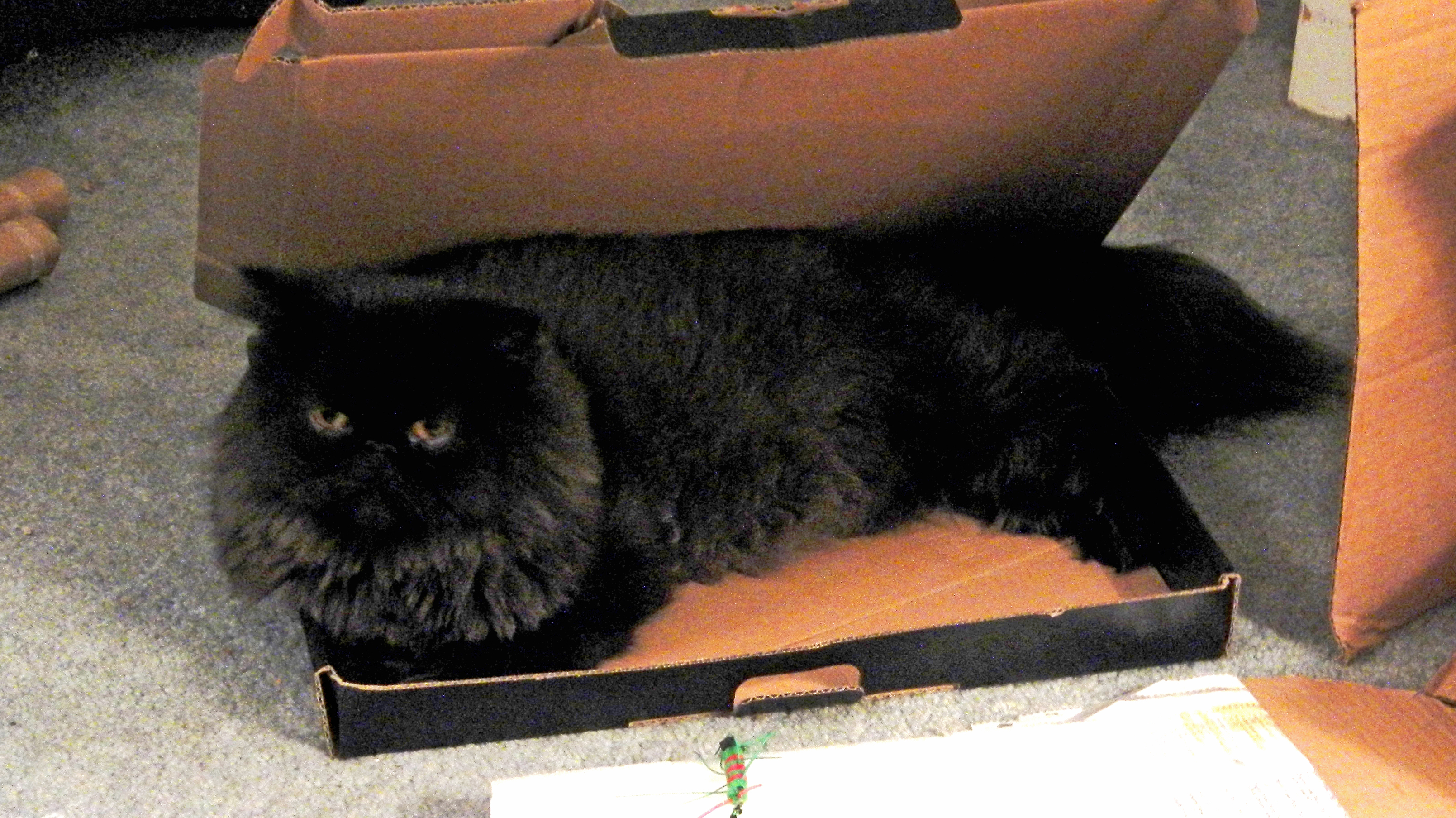 dougy in box 6