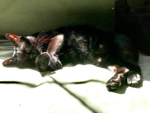 charles enjoying sun