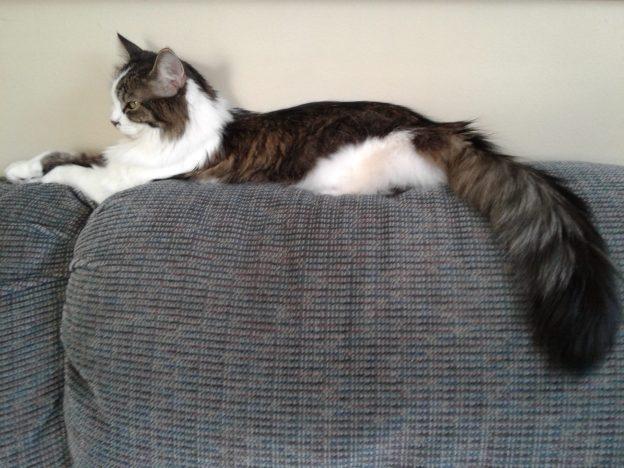 saki's fine tail