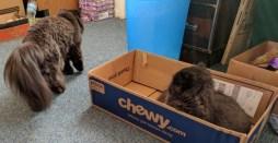 dougy and andy box 5