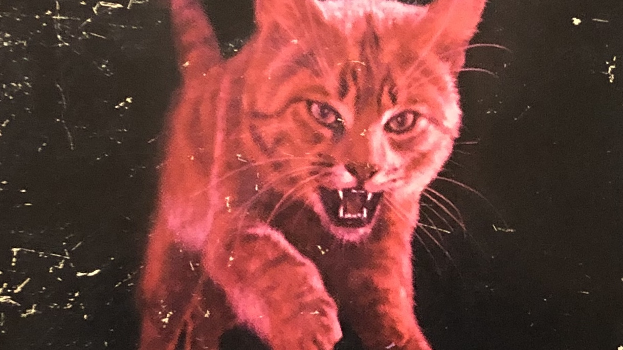 A pink cat on the cover of Berton Rouches Feral