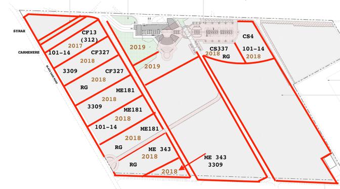 Replant Plan for Sundial
