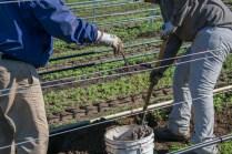 Planting Sundial