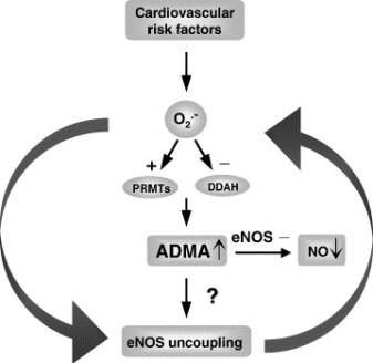admacardiacrisk