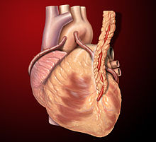 220px-Heart_saphenous_coronary_grafts