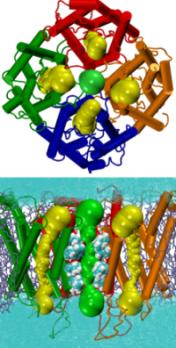 centralpore-small  Tetrameric Pore