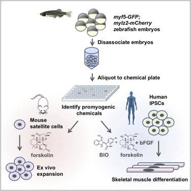 zebrafish-embryo-culture-system