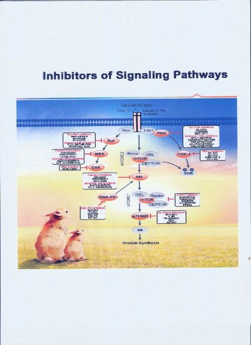 inhibitors of signaling pathways-1