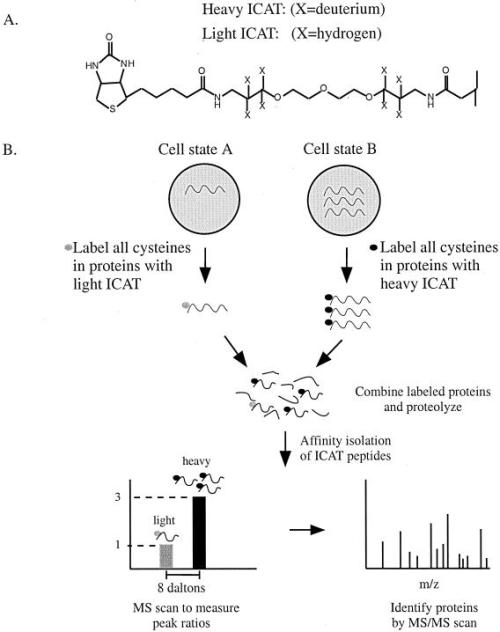 ICAT method for measuring differential protein expression