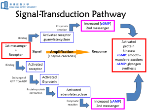 Signal-Transduction-Pathway