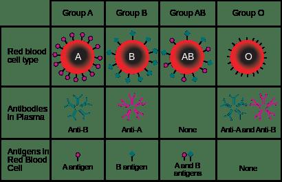 ABO_blood_type.svg