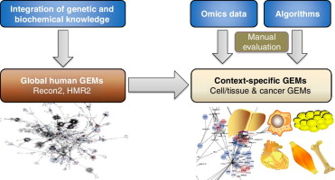 integration of genetic and biochemical knowledge