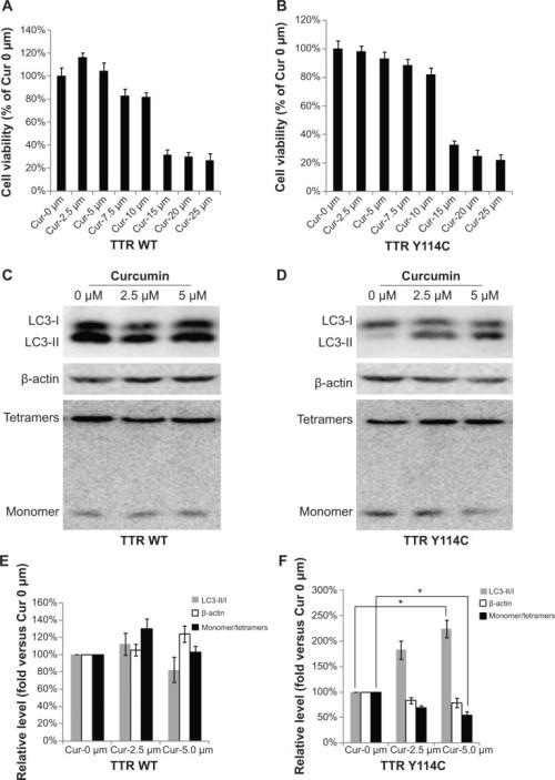 Curcumin decreased monomeric TTR by promoting autophagy dddt-8-2121Fig2
