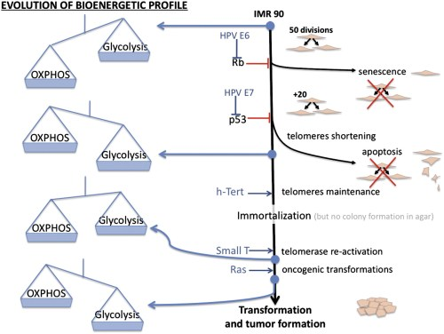 Impact of different oncogenes on tumor progression and energy metabolism remodeling.