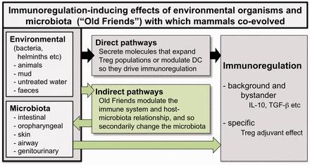 microbial immunomodulation