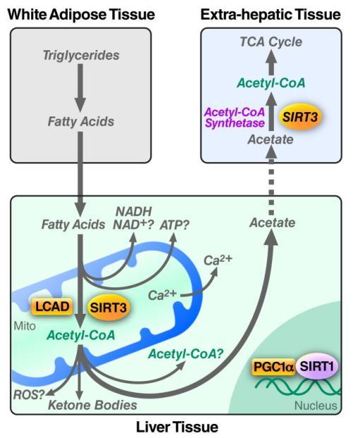 mitochondria-at-nexus-of-cellular-signaling-nihms239607f3