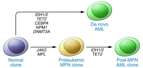 mutations have been observed with IDH1_2 mutations leukemias