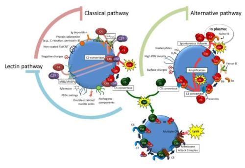 pathways of complement cascade activation nihms-401532-f0001