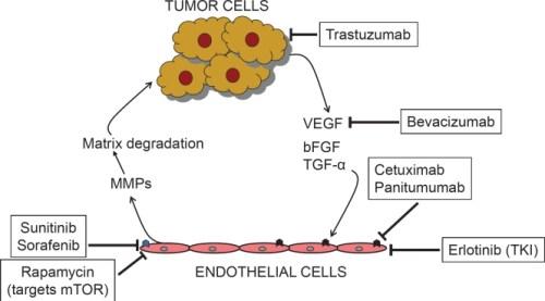 angiogenesis inhibitors oncotarget-02-122-g001