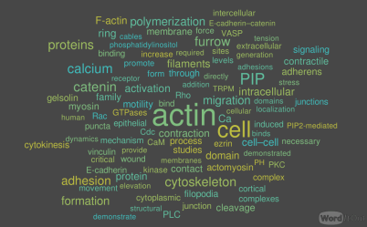 Article II Role of Calcium, the Actin Skeleton, and Lipid Structures in Signaling and Cell Motility