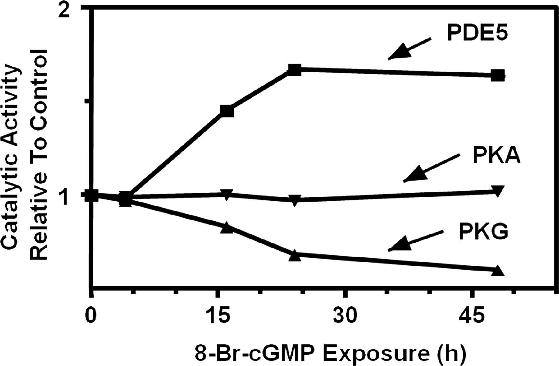 Cgmp Dependent Protein Kinases And Cgmp Phospho Sterases In Nitric Oxide And Cgmp Action