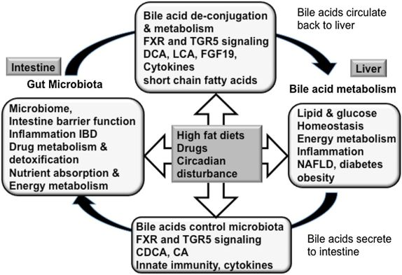 Image result for bile microbiota