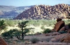 Namib after rain