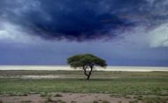 Namibia.Etosha.cloud