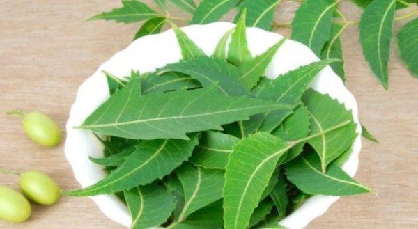 7 amazing benefits of chewing neem regularly
