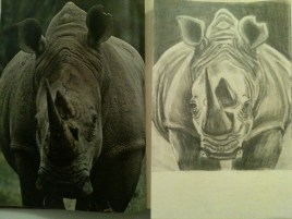I drew a rhinoceros!