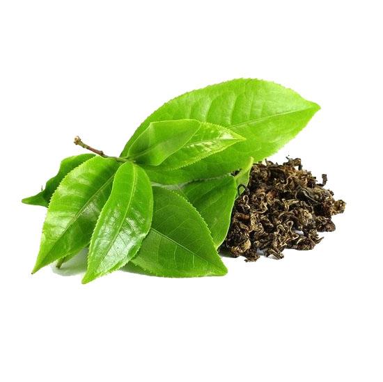 Green Tea Extract-ingredients-PrimeShred