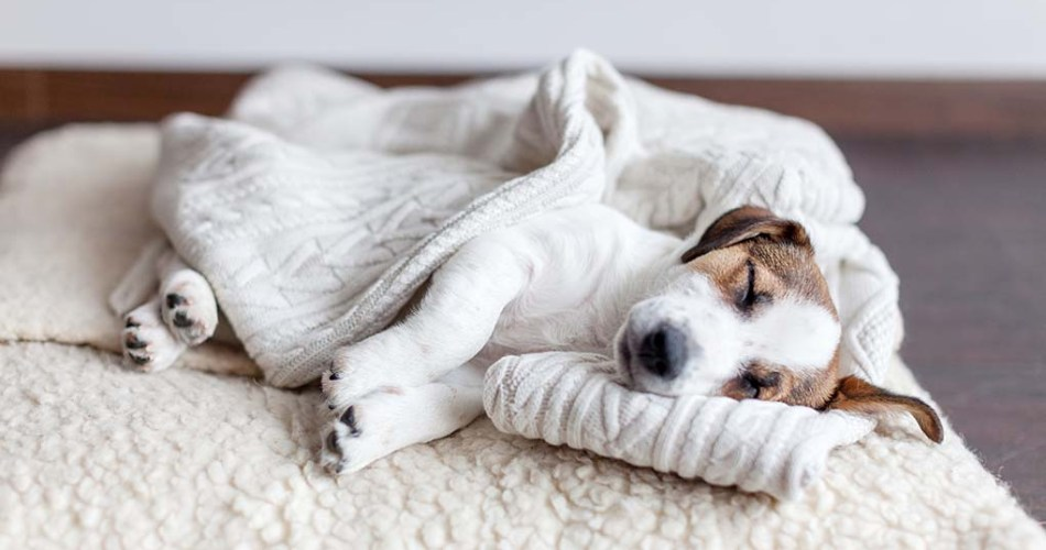Pneumonia In Dogs - Causes, Symptoms, And Treatment.