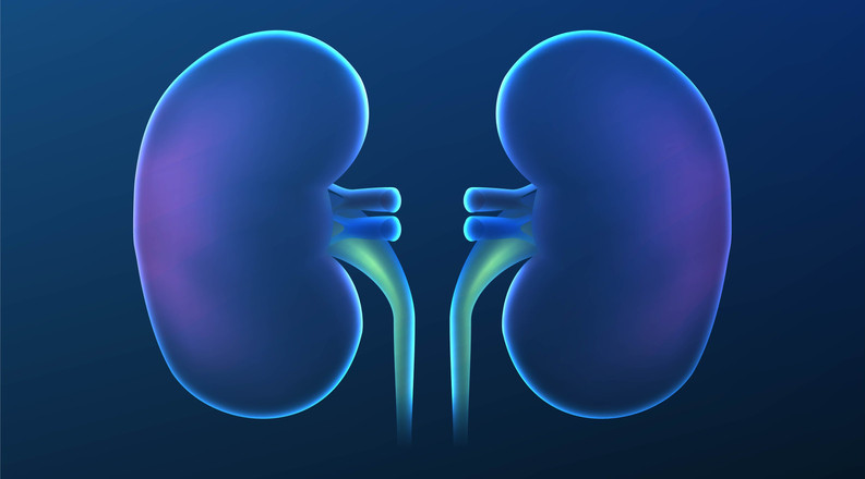 Healthy Kidneys: Are The Filters Working Properly?