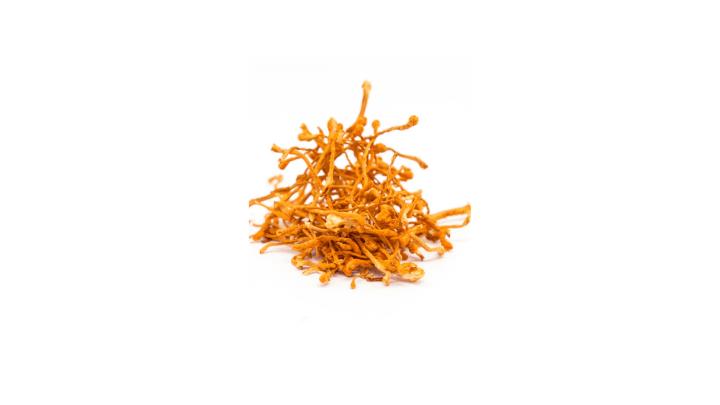 Spore Metabolic Boost Ingredients - Cordyceps