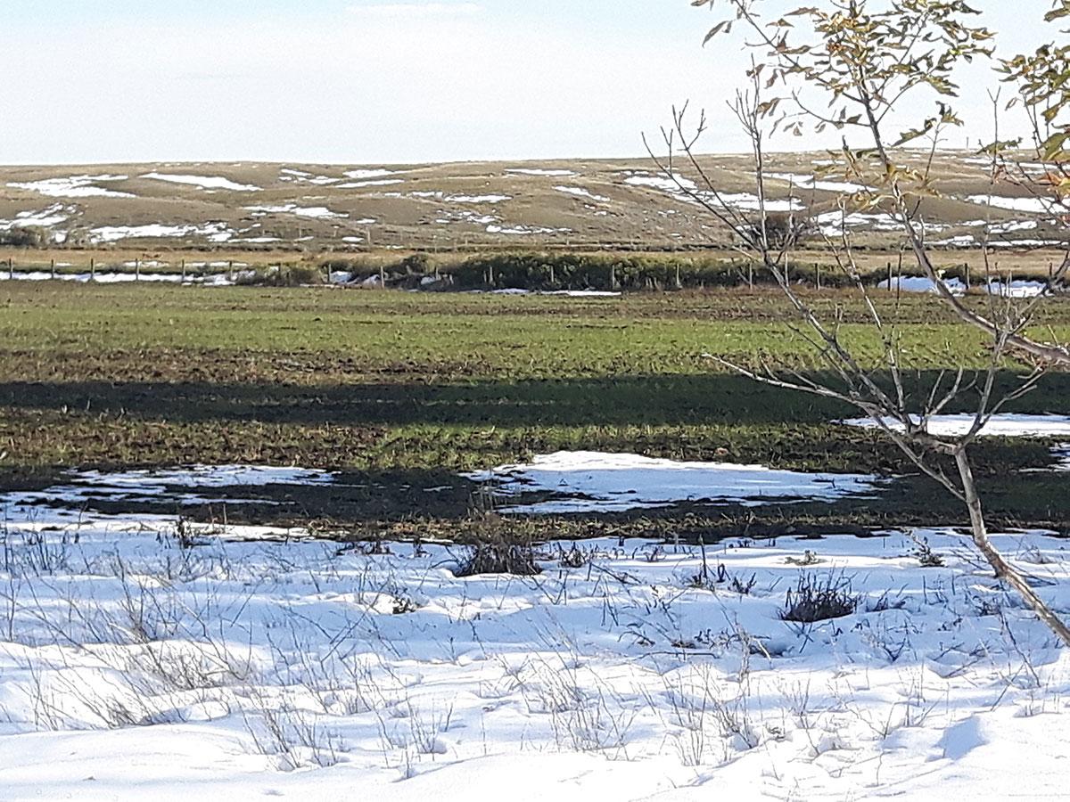 2019 Winter Wheat Project