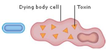 nucleus1