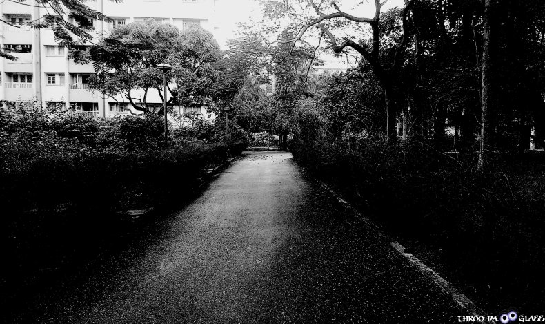 X,xyst,garden,trees,TIFR,peaceful,walk,a-z,a2z, a2z challenge,pravs,praveen,throo da looking glass, through the looking glass, bangalore blog, praveen