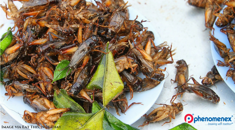 Science of Eating Insects