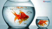 Large vs Small Organic Molecules in Biopharmaceuticals