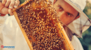Beekeeper Trains Bees to Make Cannabis-Infused Honey