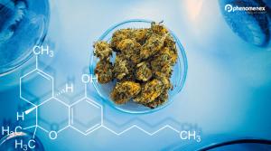Cannabis GC-FID Method Development