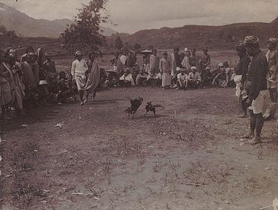 Sejarah Sabung Ayam Di Nusantara Bukan Sekedar Permainan Semata (4/4)
