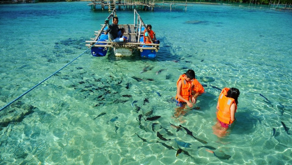 Juag Fish Sanctuary in Matnog - OPTIONAL: Fish Feeds for P60 per group and donation to the hardworking caretakers